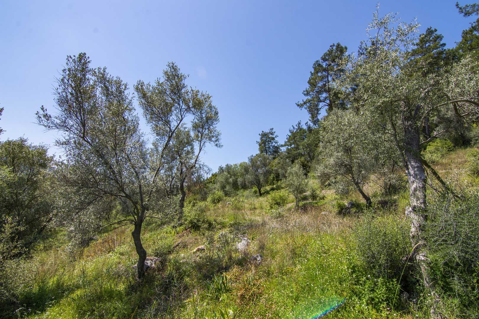 Land For Sale in İnlice Fethiye, Turkey